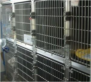 中型犬・大型犬用入院設備