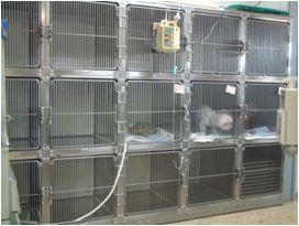 小型犬・猫用入院設備